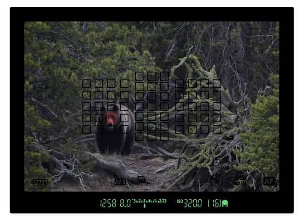 Пример снимка Canon EOS 5d MarkIV