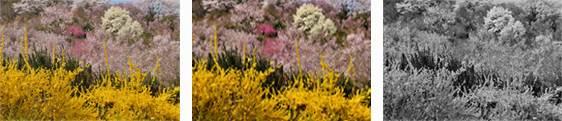 Пример снимка Nikon D810