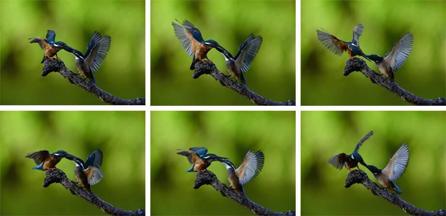 Образец снимков Nikon D610